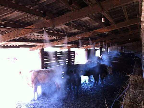 туман в животноводстве